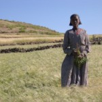 The Access and Benefit-Sharing Agreement on Teff Genetic Resources